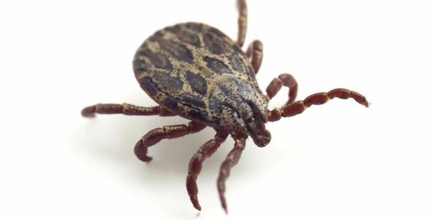 Lyme Disease: Don't keep it a secret!